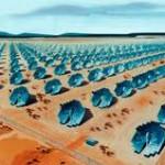 ОАЭ инвестируют в солнечную энергетику миллиарды долларов