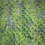 Фотогальваническое покрытие Solar Ivy
